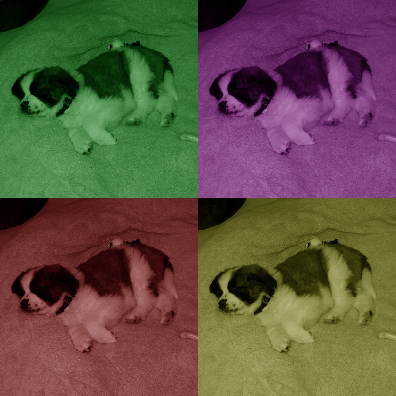 Pop Art Puppy